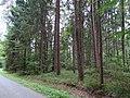 Grabhügelgruppe Hartwald Wald 3.jpg