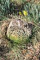 Gradsko groblje u Gornjem Milanovcu, stari deo 37.jpg
