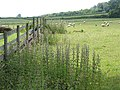 Grazing land near Lower House, Yatton - geograph.org.uk - 451604.jpg