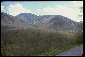 Great Smoky Mountains National Park GRSM8832.jpg