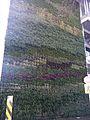 Green wall close up at YVR.JPG