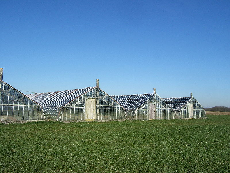 Bestand:Greenhouses for Grapes.jpg