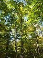 Griffy Woods - P1100486.JPG
