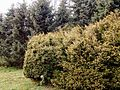 Grishko botanical garden-1.JPG