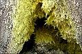 Guadeloupe Volcan Soufrière - vue rapprochée de la bouche d'une fumerolle avec dépôt de soufre.jpg