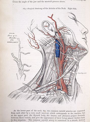 Fileh Gray Surgical Anatomy Of The Arteries Wellcome L0021983