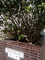 HKU 香港大學 Sun Yat-Sen Steps 中山階 Sun Yat-sen Place 中山廣場 sign March-2017 Lnv2 02.jpg