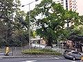 HK ML 香港半山區 Mid-levels 舊山頂道 Old Peak Road near Hornsy Road April 2020 SS2 09.jpg