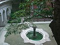 HK Sai Ying Pun Mid-Levels 般咸道 Bonham Road 英皇書院 King's College front garden Fountain n Fig Tree Aug-2009.JPG
