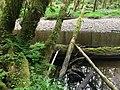 Haans Creek - Haida Gwaii (27232055886).jpg
