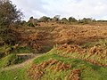 Hag Hill, New Forest - geograph.org.uk - 305590.jpg