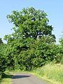 Hagen-Boele, Stieleiche 3.JPG