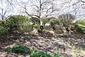 Hakoda Castle mushadamari.jpg