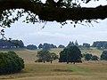 Halfmoon Furze, Petworth Park - geograph.org.uk - 231139.jpg