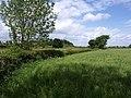 Hedge near the A48 - geograph.org.uk - 1319966.jpg