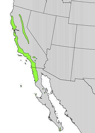 Heteromeles - Image: Heteromeles arbutifolia range map