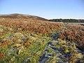 Hill farmland near Fauldshope - geograph.org.uk - 298241.jpg