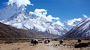 "Yaks passing by Pheriche in the Everest region, Nepal.: Wiki Loves Earth 2016 1st Price Winner ""Everrest"""