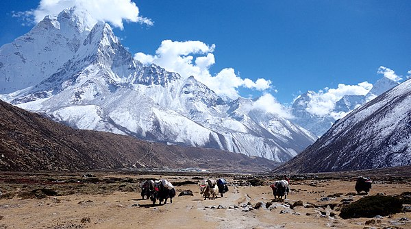 Himalayan Yaks in the Everest Region © Agnes Kwong, freely licensed under CC BY-SA 4.0