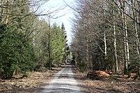 Hoehenkirchner Forst Grasbrunn-3.jpg