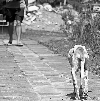 Thrownness - Image: Homeless Dog Walks the Streets (7705116042)