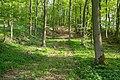 Horn-Bad Meinberg - 2015-05-10 - LIP-028 Silberbachtal mit Ziegenberg (64).jpg