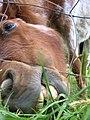 Horse-eating.jpg