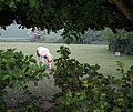 Horse paddock - geograph.org.uk - 817164.jpg