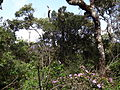 Horton Plains National Park 95.JPG