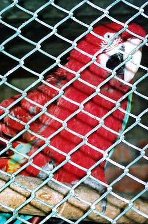 Huachipa Bird cage
