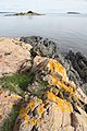 Hurum geology IMG 5694 leptit amphibolit.JPG