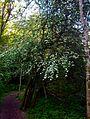 Hyland Woods (formerly Hyland Forest Park) 4.jpg