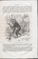 Hylobates leuciscus - 1700-1880 - Print - Iconographia Zoologica - Special Collections University of Amsterdam - UBA01 IZ19800088.tif