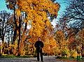 I.Bacivarov, Autumn in Botanical Garden Bucharest.jpg