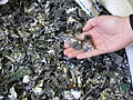ID card database destroyed - Shredded bits of the database.jpg