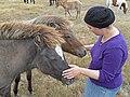 Icelandic horse7.jpg