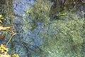 Ichetucknee Springs State Park Blue Hole Spring 8.jpg
