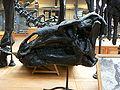 Iguanodon bernissartensis skull.JPG