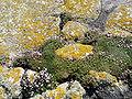 Ile de Sein-Végétation au printemps.JPG