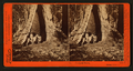 In the Mariposa Grove, Mariposa County, Cal, by Watkins, Carleton E., 1829-1916 12.png