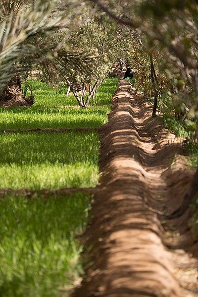 Bewässerungskanäle in Oasen