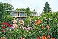 Ishida Rose Garden in Odate City 20190615c.jpg