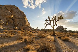 JOSHUA TREE NATIONAL PARK (15112433079).jpg
