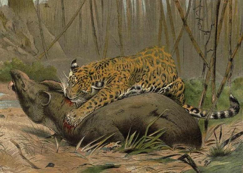 Jagvstapir