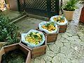 Jardines de Alfàbia (12).jpg