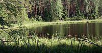 Jezioro Żabinek fragment Wdecki PK 01.07.10 p.jpg