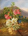 Joseph Schuster - Alpine Flowers.jpg