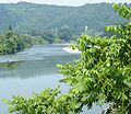 Juglans ailantifolia Mogami River.jpg