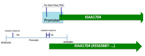 KIAA1704 - KIAA1704 Promoter Prediction