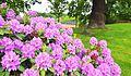 KLTK blomster.jpg